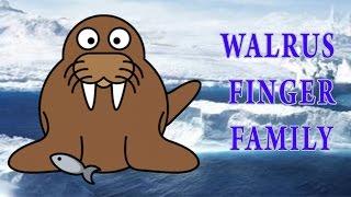 Walrus Finger Family | Animal Finger Family