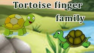 Tortoise Finger Family | Animal Finger Family