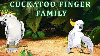 Cuckatoo Finger Family | Animal Finger Family