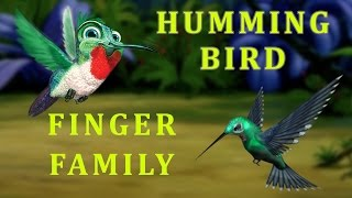 Humming Bird Finger Family | Animal Finger Family