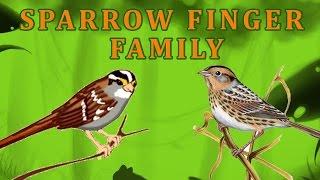 Sparrow Finger Family | Animal Finger Family