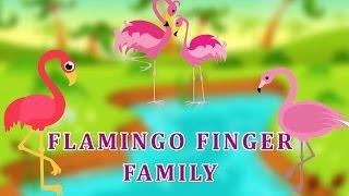Flamingo Finger Family | Animal Finger Family