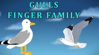 Gulls Finger Family | Animal Finger Family