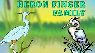 Heron | Animal Finger Family