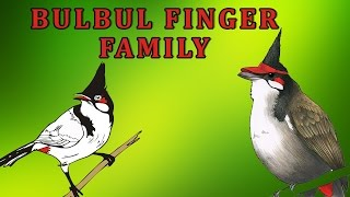 Bulbul | Animal Finger Family