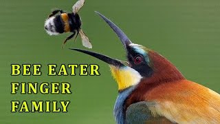 Bee Eater | Animal Finger Family