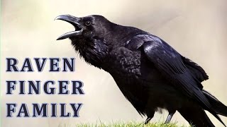 Raven | Animal Finger Family