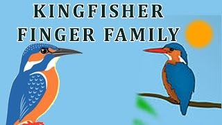Kingfisher | Animal Finger Family