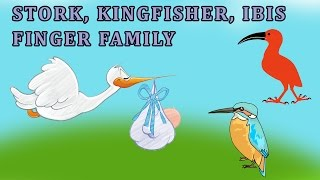 Stork  | Animal Finger Family