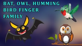 Hummingbird, Bat And Owl  | Animal Finger Family