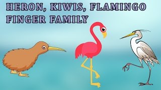 Kiwis , Heron And Flamingo  | Animal Finger Family