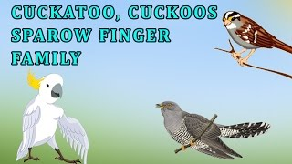 Cuckatoos, Cuckoos And Sparrow | Animal Finger Family