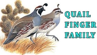 Quail | Animal Finger Family