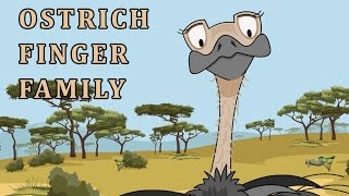 Ostrich | Animal Finger Family