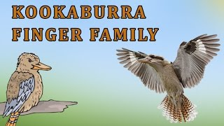 Kookaburra | Animal Finger Family