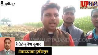 हमीरपुर में ट्रेन की चपेट में आने से अन्ना गायों की मौत