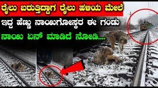 ರೈಲು ಬರುತ್ತಿದ್ದಾಗ ರೈಲು ಹಳಿಯ ಮೇಲೆ ಇದ್ದ ಹೆಣ್ಣು ನಾಯಿಗೋಸ್ಕರ ಈ ಗಂಡು ನಾಯಿ ಏನ್ ಮಾಡಿದೆ ನೋಡಿ | Kannada News