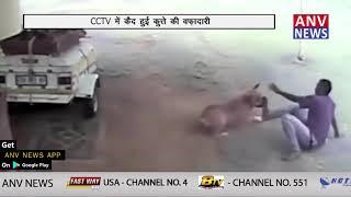 CCTV में कैद हुई कुत्ते की वफ़ादारी  || ANV NEWS