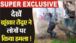 Super Exclusive- देखें खूंखार Leopard के हमले की Live Video