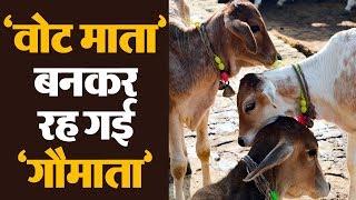 क्यों गायों का 'स्वर्ग' बन गया नर्क ? गौमाता के नाम पर हो रही सिर्फ Politics