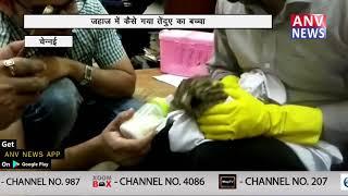 जहाज में कैसे गया तेंदुए का बच्चा    ANV NEWS HARYANA