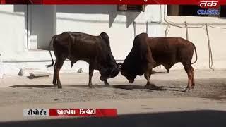 Dhoraji - Terror Near LIC Office