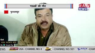 गऊयों की मौत    ANV NEWS PUNJAB