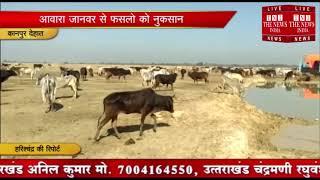 [ Kanpur Dehat ] कानपुर देहात में गोवंश ने गरीबों की फसलें चौपट की, नाराज़ किसानों ने किया जाम