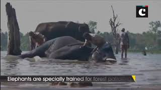 Sakrebailu Elephant Camp helps in domesticating rescued elephants from across the country