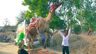 dj rasiya मेरी एड़ी की धमक डोडो रिह्जो रसिया || meri adi ki dhamak || Bhanwar Khatana