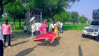 New Dj Rasiya || डी जे वाला गानो लगा शादी को || Dj wala Gano laga sadi ko || Rajasthani Sekhawati