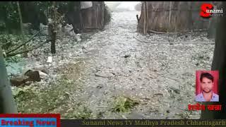 बर्फबारी की वजह से गर्मी की फसल हो सकती है खराब लोरमी मुंगेली की रिपोर्ट राजेश खन्ना
