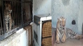 Zoo Animals Will Be Facilitated With Air Coolers At Nehru Zoological Park   @ SACH NEWS  