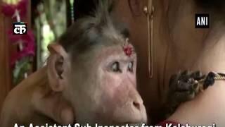 लेडी सहायक उप निरीक्षक छोटे बंदर के जीवन को बचाया