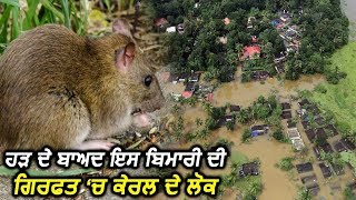 Kerala में High Flood के बाद का Rat Fever कहर, 9 की मौत