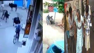 Gai Aur Bail Ka Aatank Kar Raha Hai Is Desh Ka Mahool Kharab   @ SACH NEWS  