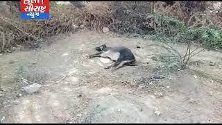 થરાદ-સિમ વિસ્તારમાં બીમાર ગાયની સારવાર કરાય