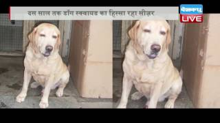 DBLIVE | 14 October 2016 | Caesar, the last 26/11 Mumbai Police dog, dies