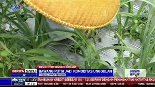 Tegal Ditargetkan Jadi Penghasil Bawang Putih Terbesar Indonesia