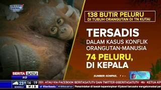 Fakta Data: Kisah Tragis Orangutan