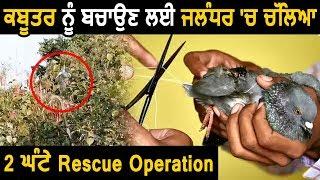 Pigeon को बचने के लिए Jalndhar Police Commissioner के घर के बाहर Rescue Operation