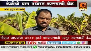 संगमनेर - शेतकऱ्यावर केळीची बाग उध्वस्त करण्याची वेळ