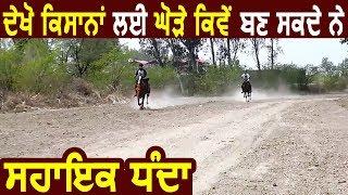 Faridkot में हो रही All India Horse Championship में देश बर से पहुंचे Horse