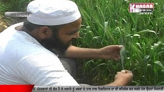 Farmer Upset In Sangrur about Kale tele....