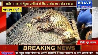सैंकड़ों ग्रामीणों ने एक तेंदुएं को पीट-पीटकर उतारा मौत के घाट : #BRAVE_NEWS_LIVE TV