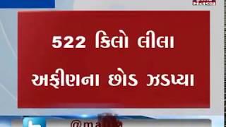 Rajkot:SOG Police arrested a man in Kothi village for growing opium | Mantavya News