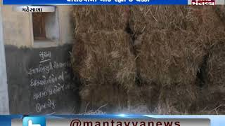 Mehsana: Cattle Breeders are not getting sufficient grass for cattle in Visnagar