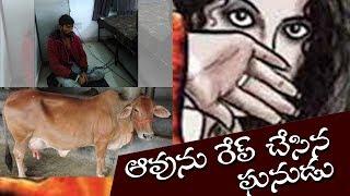 ఛీ ఛీ ఆవుపై అత్యాచారమా ? | A Man Trying to Do Unnatural Thing With Cow | Top Telugu TV