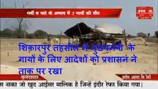 शिकारपुर तहसील में मुख्यमंत्री  के गायों के लिए आदेशों को प्रशासन ने ताक पर रखा THE NEWS INDIA
