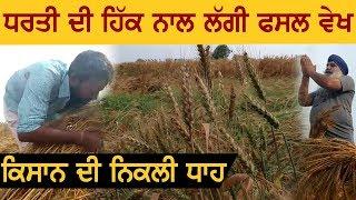 किसानों पर Kudrat का कहर, फसल के गले लग रोया किसान